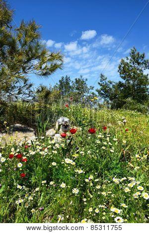 spring flowering in nature reserve in a neighborhood Nazareth, Lower Galilee, Israel poster