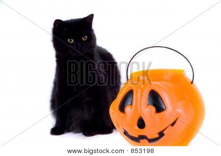 Black cat and candy pumpkin on white background. poster