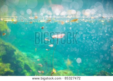 Mexican cenote underwater