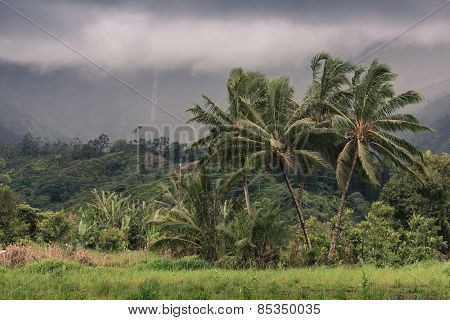 View Overlooking Hanalei On Kauai, Hawaii