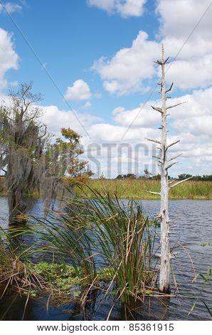The swamp tour