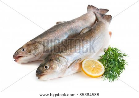 Trout fish with fresh lemon and herbs