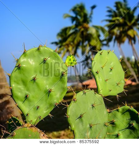 Tropical Background. Prickly pear cactus of blue sky with palms poster