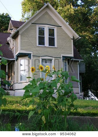 Victorian Sunflowers