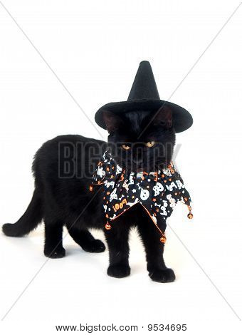 Black cat with witch hat and Halloween bib on white background poster
