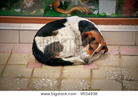 Sad and lonely stray dog