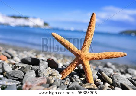 closeup of a seastar in the seashore in a shingle beach