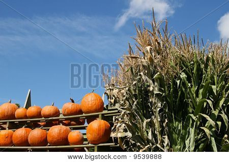 Rustic Harvest Scene With Pumpkins And Cornstalks Against A Blue Sky