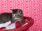 Cute tabby kitten sitting in red basket with rose pedals on heart background poster