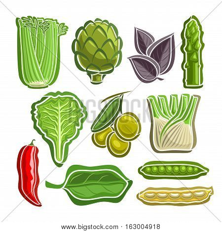 Vector Set Vegetables simple Logo: celery, artichoke, basil, asparagus, lettuce, olives, fennel, chilli, spinach, beans, peas; abstract primitive simplistic vegetables logo or icon, isolated on white.