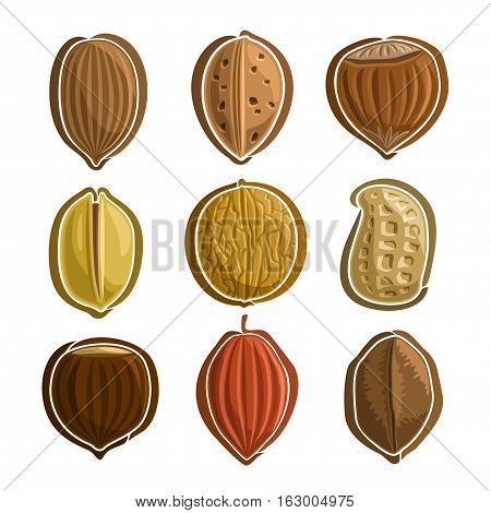 Vector Set Nuts Logo: pecan, almond, hazelnut filbert, pistachio, walnut, peanut groundnut, chestnut, cocoa, brazil nut; abstract primitive simplistic nuts logo or icon, hazel nutlet isolated on white