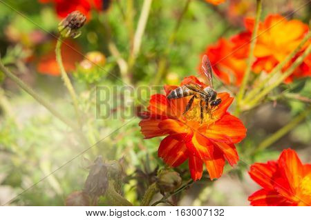 Red Flowers and Insects in the park