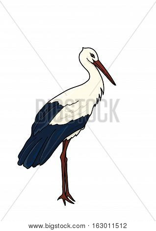 The tall stork with black and white plumage on a white background.
