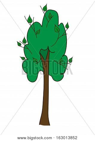 Tall tree with a brown long barrel and  broad round upper branches with young green shoots, leaves on a white background.