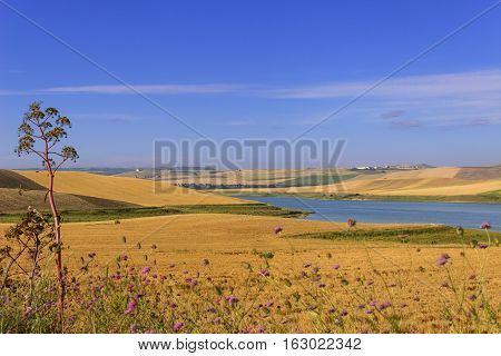 RURAL LANDSCAPE SUMMER.Between Apulia and Basilicata:cereal fields in the early morning. Poggiorsini (Bari) -ITALY-Lake Basentello surrounded by cultivated hills.