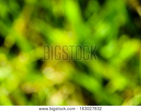 Abstract and blured green background. Natural texture