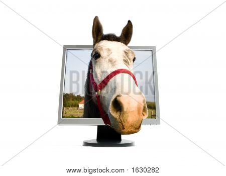 Horse On The Screen
