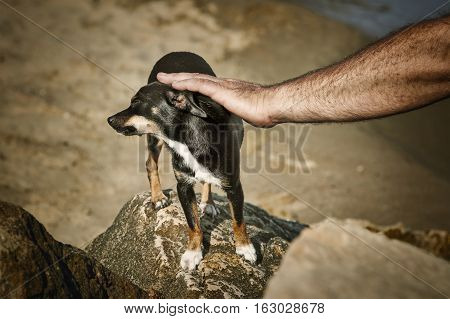 Image of Man Caresses a Little Dog