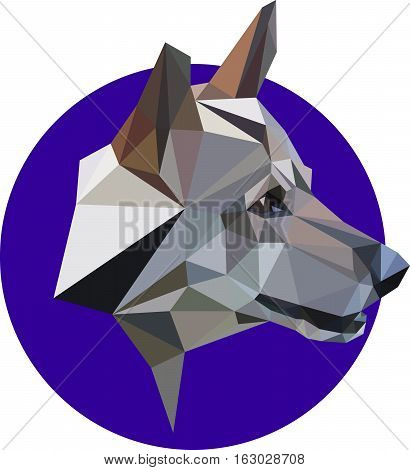 Mongrel a wolf a dog in a polygon style. Fashion illustration of the trend in style on blue background. Portrait of a dangerous predator
