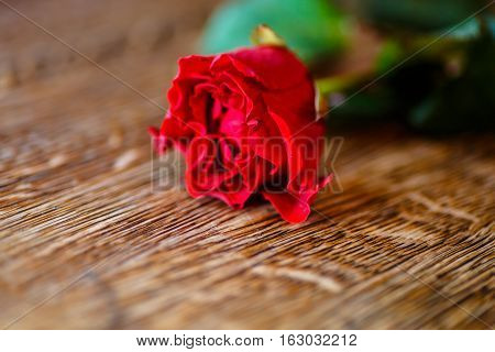 One Rose Is Lying On A Dark Table.