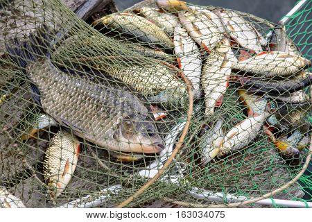 Fishing raw fish catch. The catch on a fishing trip.