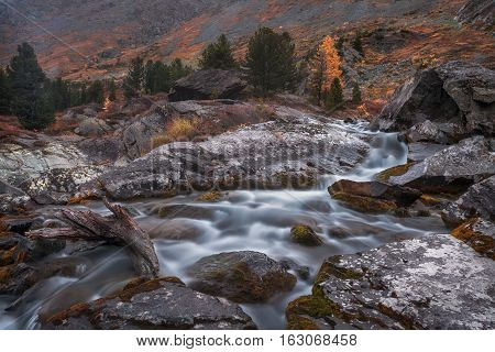 Shallow Rocky Stream Long Exposure View With Pine Trees, Altai Mountains Highland Nature Autumn Landscape Photo. Beautiful Russian Wilderness Scenery Image.