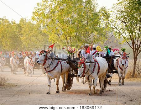Ox Carts Carrying Tourists On Dusty Road