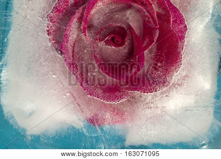 Frozen Flora - Rose