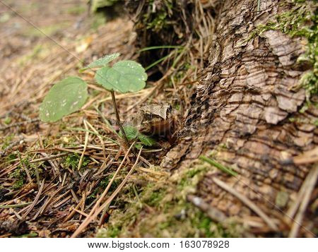 Cute green frog in the pine forest