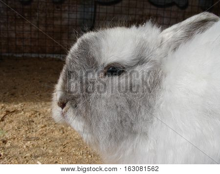 Cute white bunny sitting in a cage on farmyard