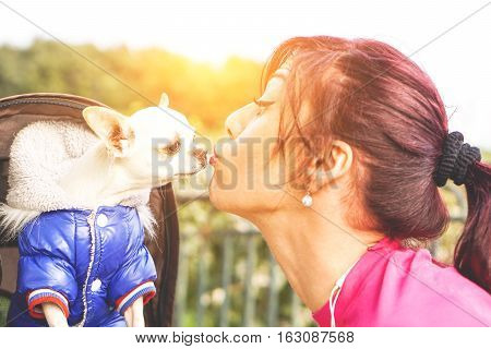 Beautiful young woman with a ponytail giving a kiss to her cute little white chihuahua - Portrait of a gorgeous redhead woman with her dog pet - Warm editing