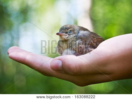 nestling in the palm on the background of the forest