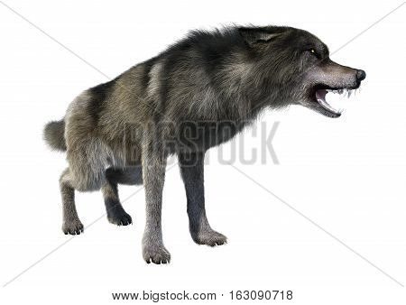 3D rendering of a gray wolf isolated on white background