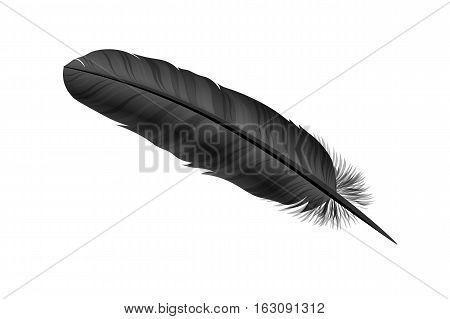 Black bird feather on white background. Vecto illustration