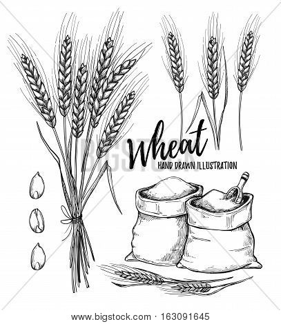 Hand Drawn Vector Illustration - Wheat. Tribal Design Elements (sacks With Flour And Wheat). Perfect