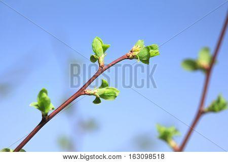Spring Budding Burst