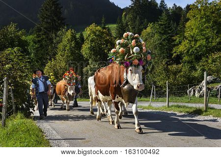 Charmey Fribourg Switzerland - SEPTEMBER 26 2015 : Farmers with a herd of cows on the annual transhumance at Charmey near Gruyeres Fribourg zone on the Swiss alps