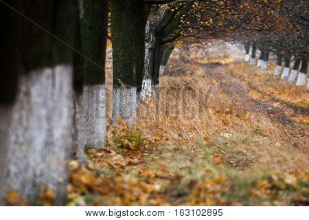 Alley of trees in autumn. Moldovan landscapes