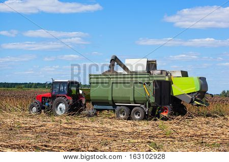 Combine harvester overloads sunflower seeds in a red tractor trailer on the field on a bright sunny day. during the autumn harvest.