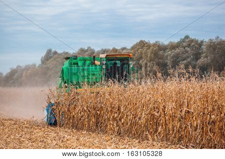 Big harvester in the field on a sunny day mowing ripe dry corn. Autumn harvest.