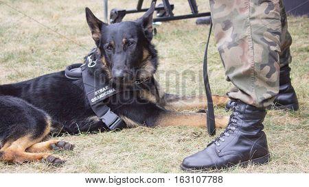 Poland Poznan -October 1 2016. Dog with sign Polish border guards.