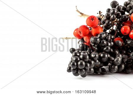 Ripe red and black rowan isolated on white background