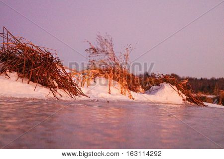 River dry grass in the crystals of snow on the banks of a winter evening