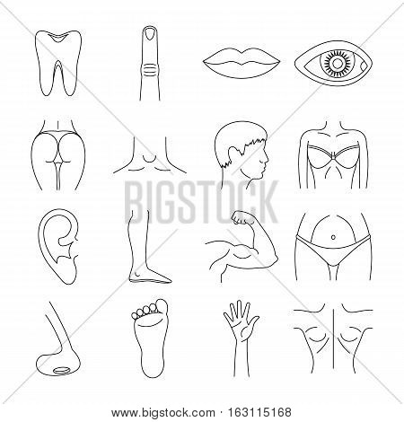 Body parts icons set. Outline illustration of 16 body parts vector icons for web