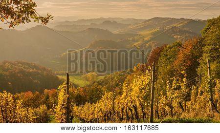 Landscape with vineyards at sunset in South Styria (Stajerska) . Austria-Slovenia border