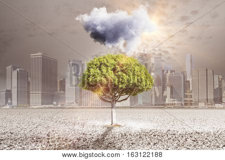 Abstract image of small cloud above green tree growing out of concrete ground in city. Persistence and success concept