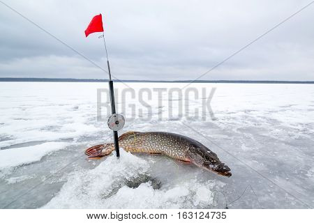 Hole and fishing rod with caught fish