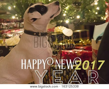Happy New Year Card with Cute dog looking up at holiday lights with words Happy New Year 2017 for post card promotion or social media network message to followers and friends animal theme background