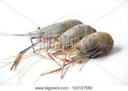 Raw shrimp Giant freshwater prawn Fresh shrimp on white background