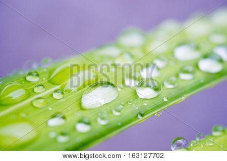 The water drop on the leaf for background